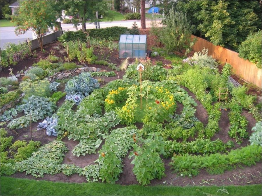 Small Vegetable Garden Layout