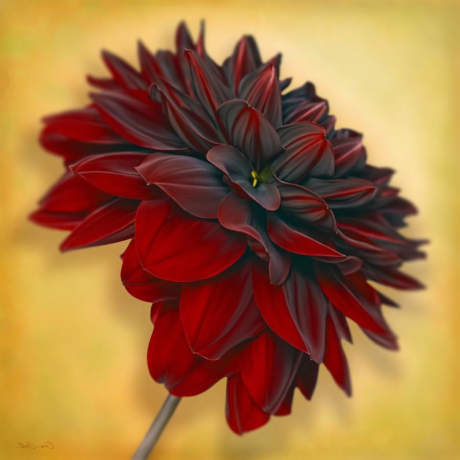 Black Dahlia Flower Photo