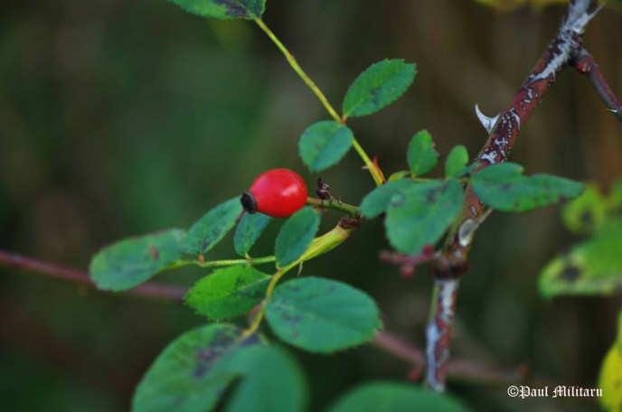 fruit-and-leaves-4