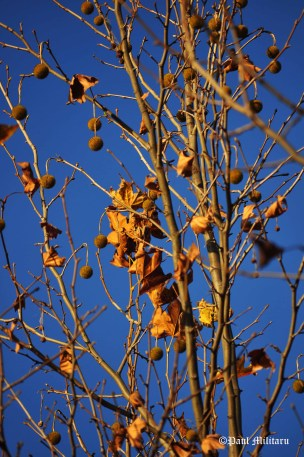fruit-and-leaves-5