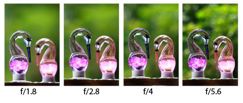 Beginners-Guide-to-Photography-Controlling-DOF-Aperture-Settings.jpg