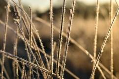 bushy-park_16-11-29_06_1500