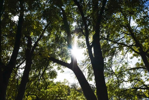orleans_gardens_13_1500