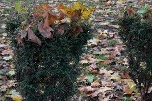 orleans_gardens_1_1500