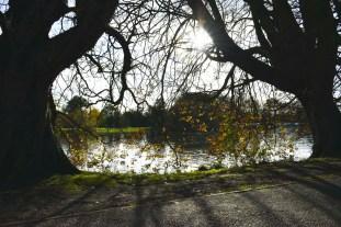 orleans_gardens_33_1500