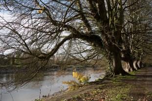 twickenham_riverside_16-11-19_28_1500