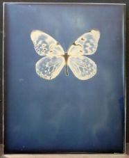 adam_fuss_butterfly_02