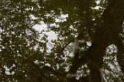 bushy_park_reflections_3_1500_20