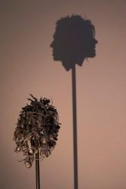 saatchi_gallery_shadow_head_1920_4