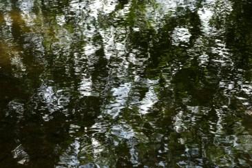 bushy_17-06-06_5_sec_475_low