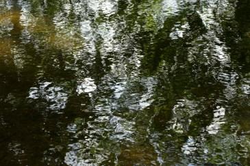 bushy_17-06-06_5_sec_476_low