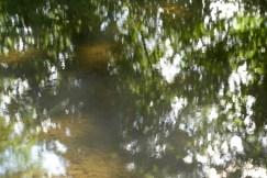 bushy_water_17-06-03_05_sec_seq_1_043_low