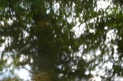 bushy_water_17-06-03_05_sec_seq_1_053_low