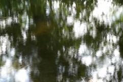 bushy_water_17-06-03_05_sec_seq_1_058_low
