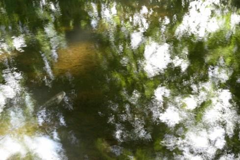bushy_water_17-06-03_05_sec_seq_1_070_low