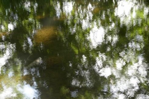 bushy_water_17-06-03_05_sec_seq_1_073_low