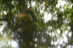 bushy_water_17-06-03_05_sec_seq_1_077_low