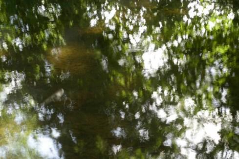 bushy_water_17-06-03_05_sec_seq_1_081_low