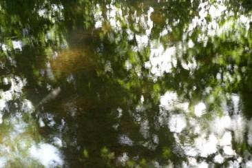 bushy_water_17-06-03_05_sec_seq_1_082_low