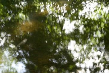 bushy_water_17-06-03_05_sec_seq_1_083_low