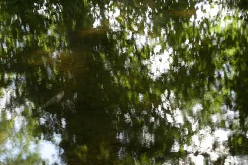 bushy_water_17-06-03_05_sec_seq_1_092_low