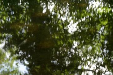 bushy_water_17-06-03_05_sec_seq_1_094_low