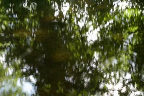 bushy_water_17-06-03_05_sec_seq_1_095_low