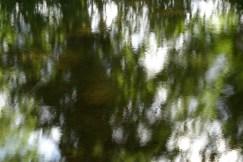 bushy_water_17-06-03_05_sec_seq_1_098_low