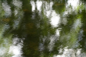 bushy_water_17-06-03_05_sec_seq_1_115_low