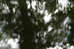 bushy_water_17-06-03_05_sec_seq_1_118_low