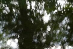bushy_water_17-06-03_05_sec_seq_1_119_low
