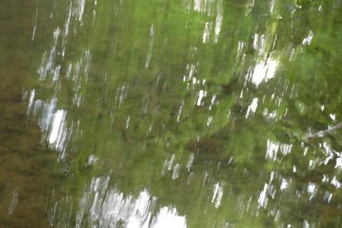 bushy_water_17-06-03_05_sec_seq_2_400_low