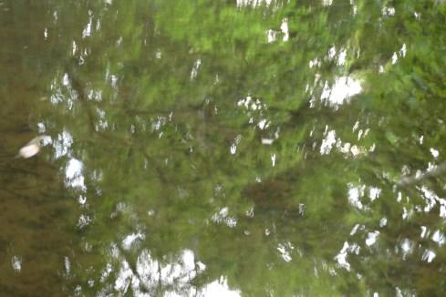 bushy_water_17-06-03_05_sec_seq_2_408_low