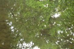 bushy_water_17-06-03_05_sec_seq_2_413_low