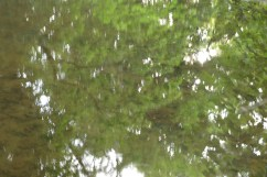 bushy_water_17-06-03_05_sec_seq_2_417_low