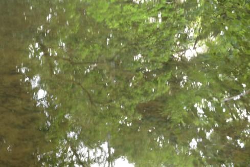 bushy_water_17-06-03_05_sec_seq_2_419_low