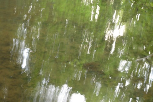 bushy_water_17-06-03_05_sec_seq_2_430_low