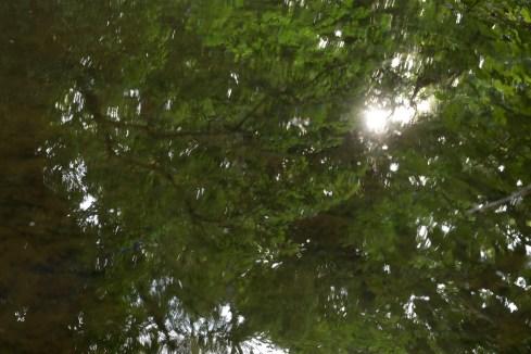 bushy_water_17-06-03_05_sec_seq_2_455_low