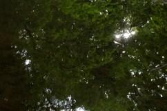 bushy_water_17-06-03_05_sec_seq_2_462_low
