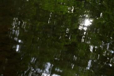 bushy_water_17-06-03_05_sec_seq_2_464_low