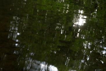 bushy_water_17-06-03_05_sec_seq_2_465_low