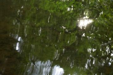 bushy_water_17-06-03_05_sec_seq_2_476_low