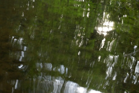bushy_water_17-06-03_05_sec_seq_2_477_low