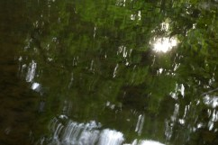 bushy_water_17-06-03_05_sec_seq_2_482_low