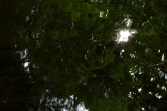 bushy_water_17-06-03_05_sec_seq_2_495_low