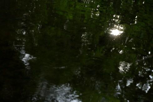 bushy_water_17-06-03_05_sec_seq_2_507_low