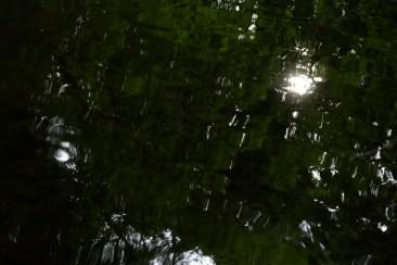 bushy_water_17-06-03_05_sec_seq_2_508_low
