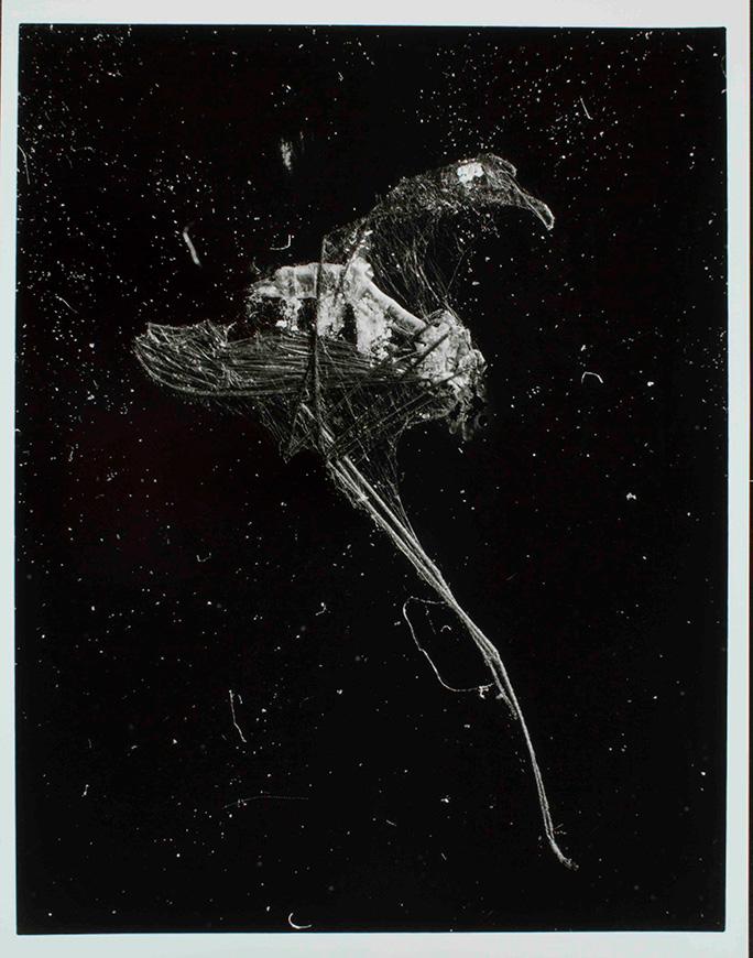 Arthropoda, 2002 / Foto Harald Strak / Collectie Fries Museum