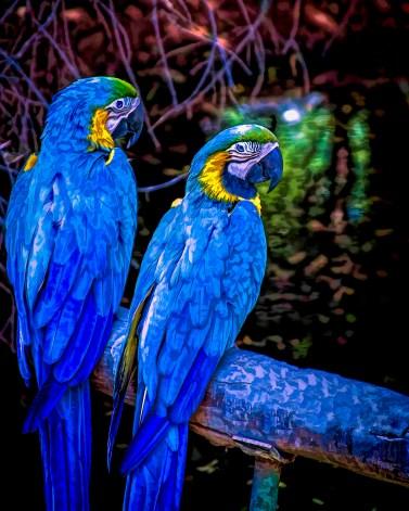 At Arizona's Wildlife World Zoo