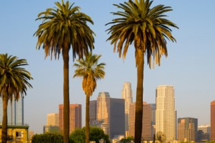 View of the Downtown Los Angeles skyline with palm trees in the foreground
